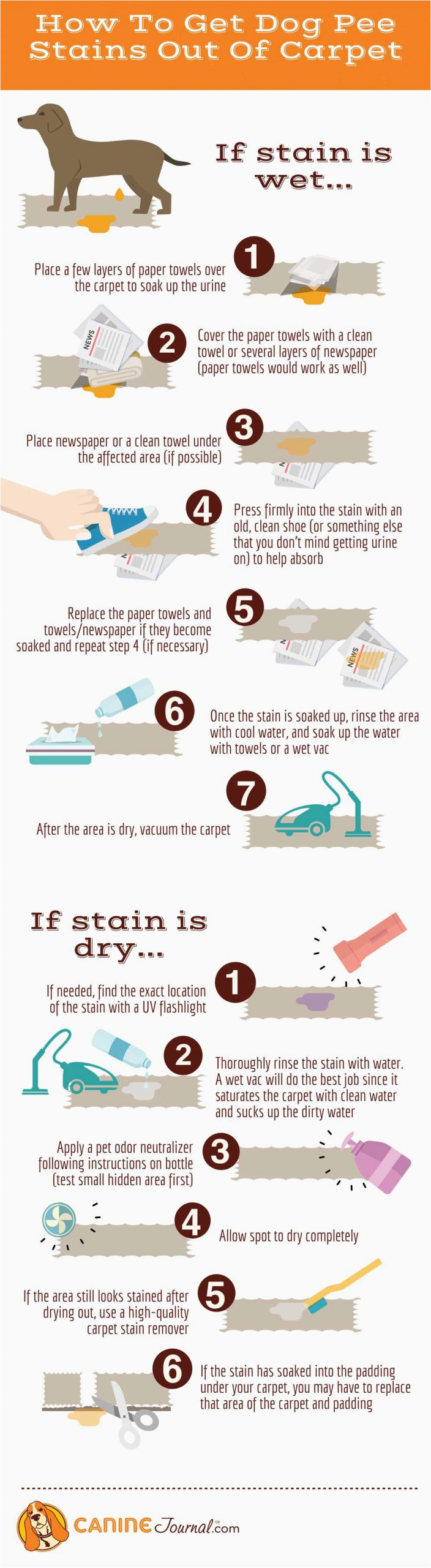 dog pee stain infographic