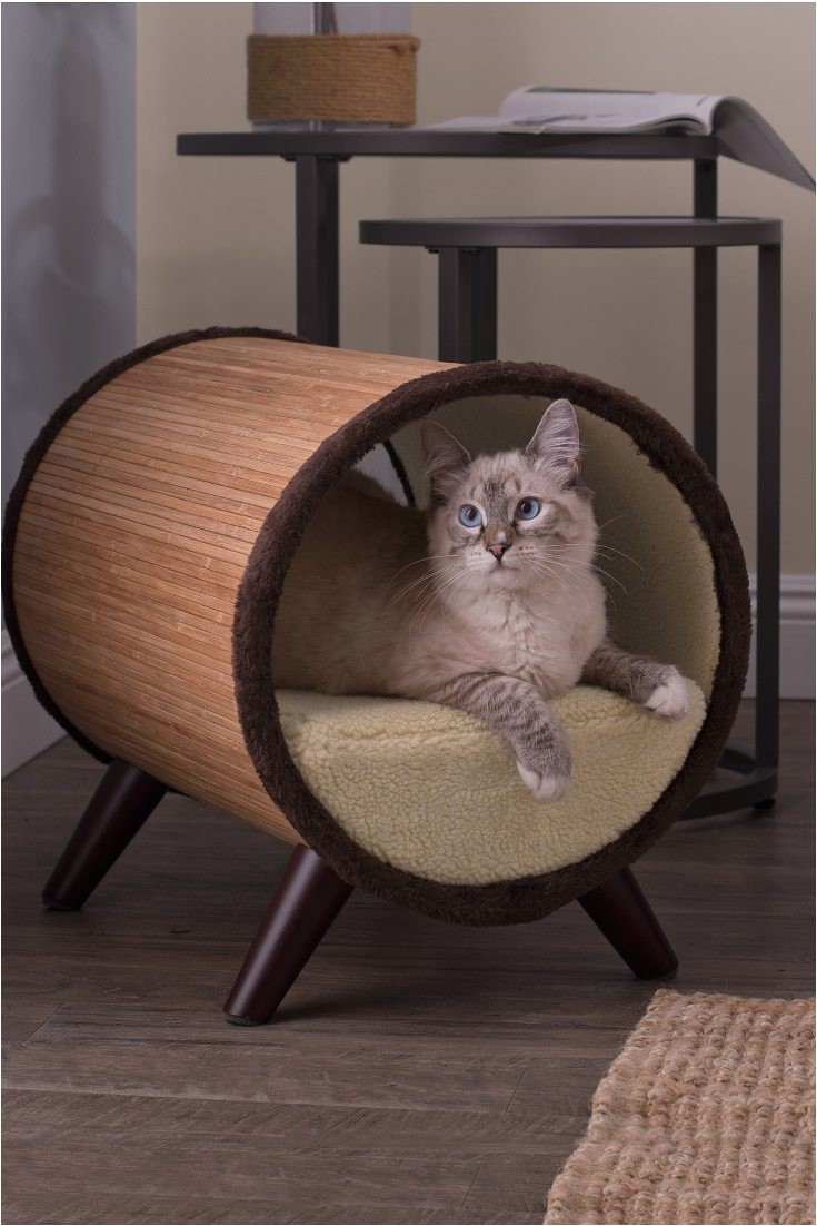 top 5 places to put cat beds
