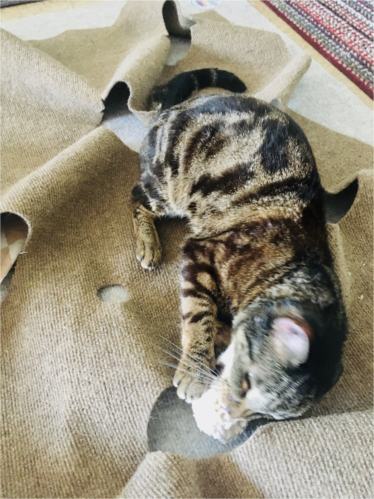 cat playing on ripple rug cotton ball toy caticles