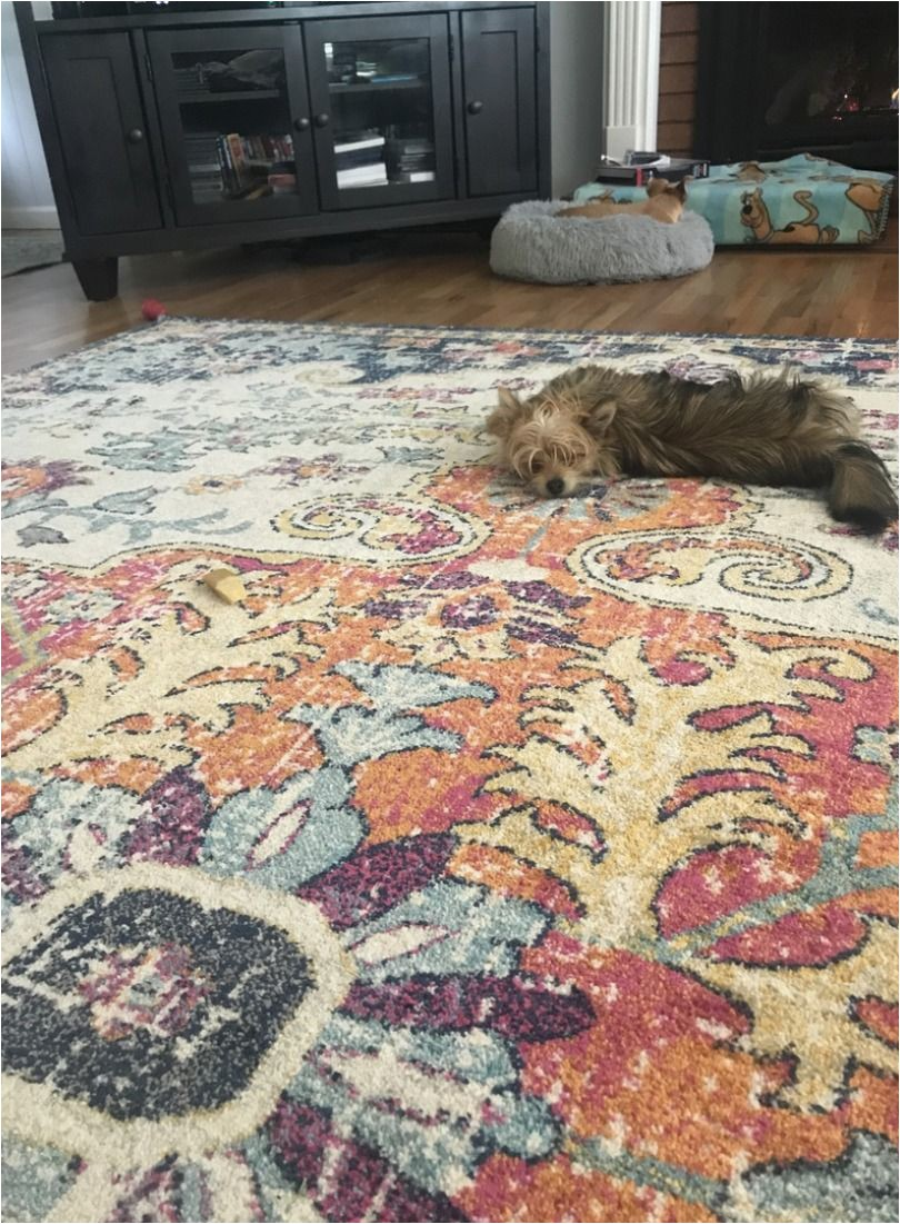 Best Type Of area Rug for Dogs Pet Friendly area Rug Material
