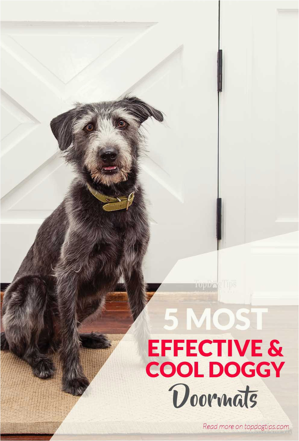 Top Best Doggy Doormats To Keep Your Home Clean and Dry