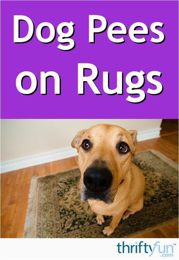 dog on a rug fancy8