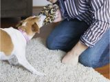 Area Rugs Good for Dogs Dogs and Puppies Chew Carpet and area Rugs for Several