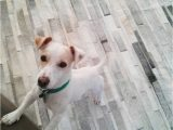 Area Rugs Good for Dogs Let S Talk About Pets and Leather area Rugs