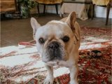 Best area Rug Material for Dogs Best Pet Friendly Rugs In the Market