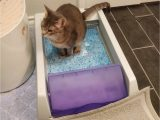 Best area Rugs for Cat Owners 30 Problem solving Products for Cat Owners You Can Get Amazon