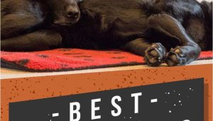 Best area Rugs for Dogs that Pee Best area Rugs for Dogs Chew to Pee Resistant & Washable