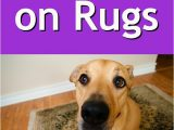 Best area Rugs for Dogs that Pee Dog Pees On Rugs