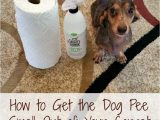 Best area Rugs for Dogs that Pee How to Get the Dog Pee Smell Out Of Your Carpet