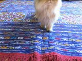 Best area Rugs with Pets How to Choose A Rug for A Cat Friendly Home
