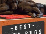 Best Type Of area Rug for Pets Best area Rugs for Dogs Chew to Pee Resistant & Washable