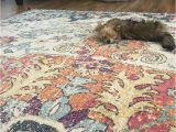 Best Type Of area Rug for Pets Pet Friendly area Rug Material
