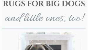 Best Type Of area Rug for Pets the Best Rugs for Big Dogs and Little Ones too — House