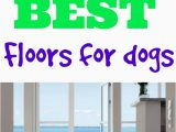 Best Type Of area Rug for Pets What S the Best Flooring for Dogs Flooring Inc